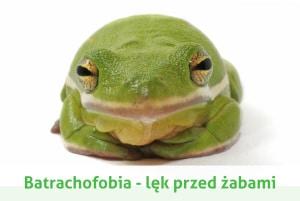 batrachofobia strach przed żabami
