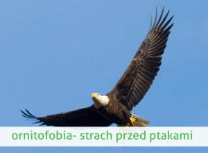 ornitofobia strach przed ptakami